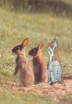 beef-rabbits